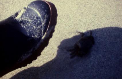 Debout les crabes