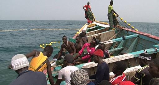 Images dz poisson d´or,poissin africain